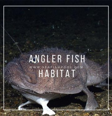 Angler-Fish-Habitat