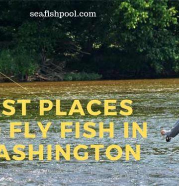 Best Places to Fly Fish in Washington State