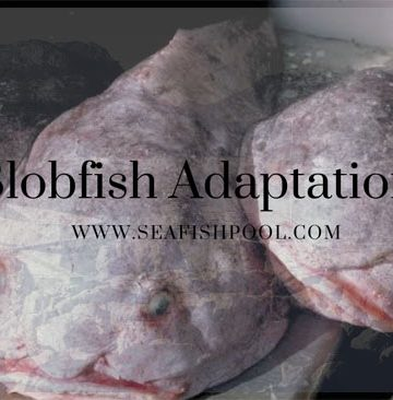 blobfish adaptations