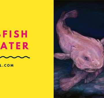 blobfish-in-water