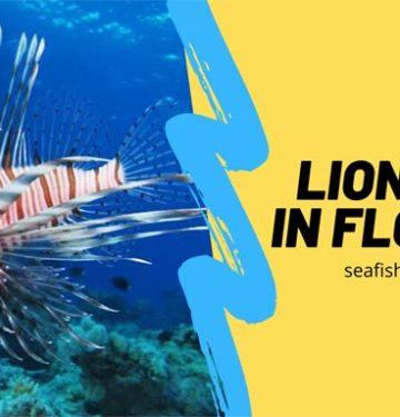 lionfish in florida