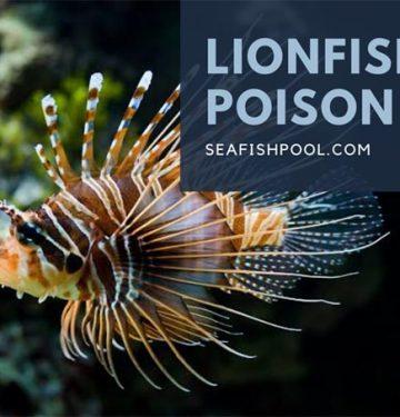lionfish poison