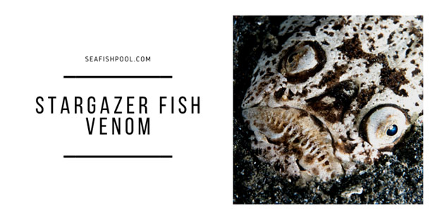 Stargazer Fish Venom