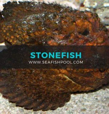 Stonefish Sting Poison Where do Stonefish Live?