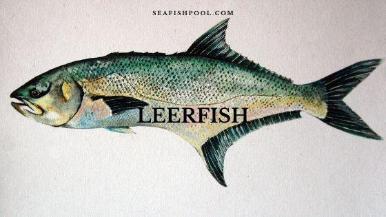 garrick-leerfish
