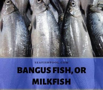 bangus fish milkfish
