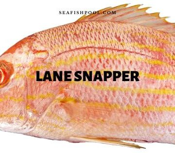 lane snapper