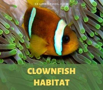 clownfish habitat