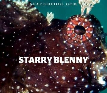 starry blenny