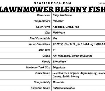 lawnmower blenny fish lawnmower blenny algae blenny lawnmower blenny diet lawnmower blenny hair algae lawnmower blenny care algae eating blenny lawnmower blenny reef safe lawnmower blenny food jewel algae blenny sailfin algae blenny rock algae blenny jewelled blenny lawnmower blenny and diamond goby algae blenny food jeweled blenny lawnmower blenny size algae blenny care algae blenny reef safe lawnmower blenny compatibility starry blenny and lawnmower blenny feeding lawnmower blenny lawnmower blenny aggressive lawnmower blenny algae